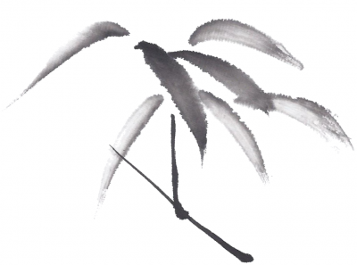 Bamboo, drawing